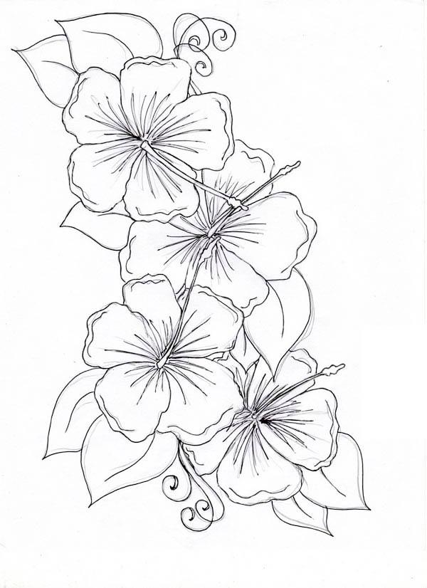 600x826 Hawaiian Flower Drawing