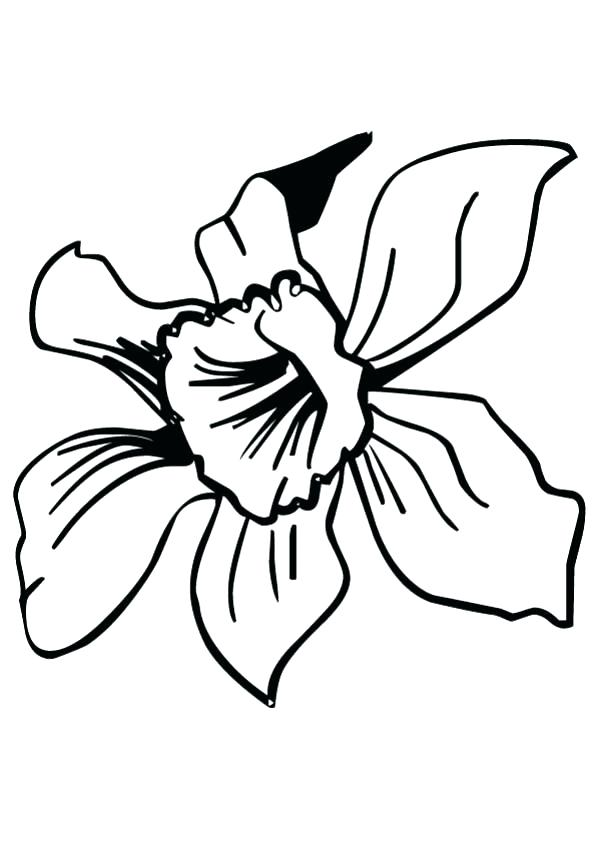 601x850 Hawaii Flowers Coloring Pages Best Ideas On Tropical Of For Adults