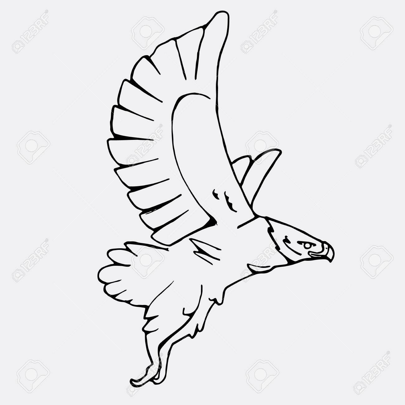 1300x1300 Hand Drawn Pencil Graphics, Vulture, Eagle, Osprey, Falcon, Hawk