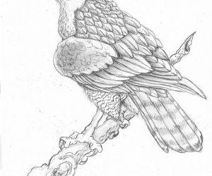 300x250 Traditional Hawk Drawing! Photoimage By Halasaar Fliiby