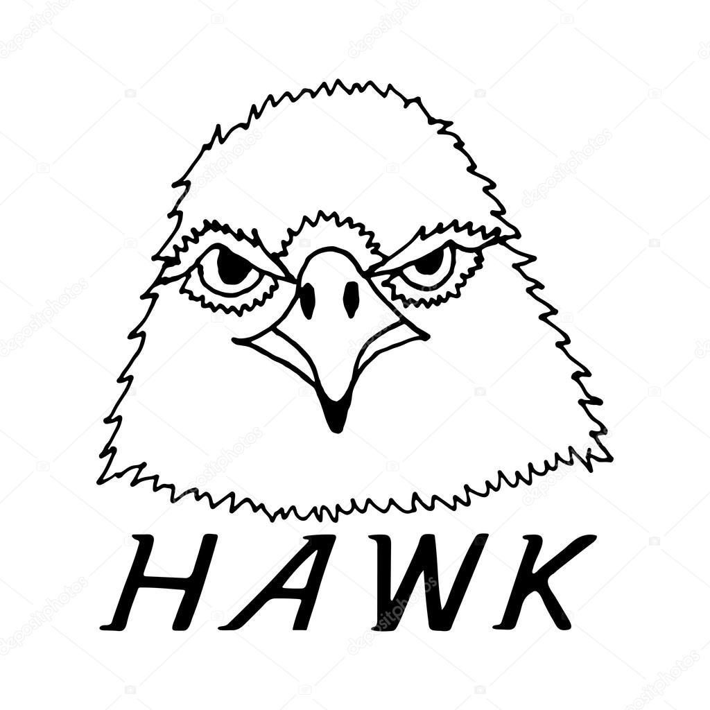 1024x1024 Hand Draw Hawk Head Stock Vector Gennadiikorchuganov