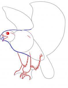Hawk Drawing Step By Step