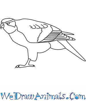 300x350 How To Draw A Northern Goshawk