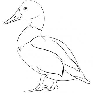 320x320 Back To Lucien Van Oosten Art Drawings Hawk Drawing Of Animals