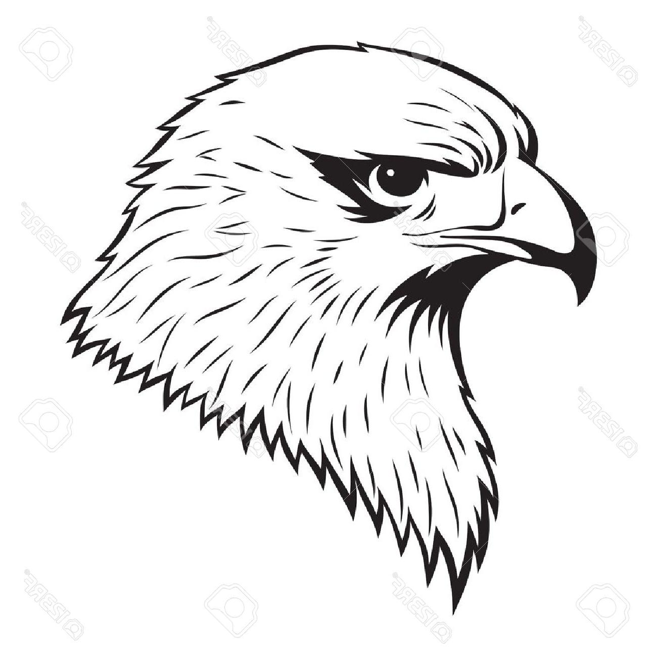 1300x1300 Simple Eagle Standing Coloring Page. Hand Drawn Pencil Graphics