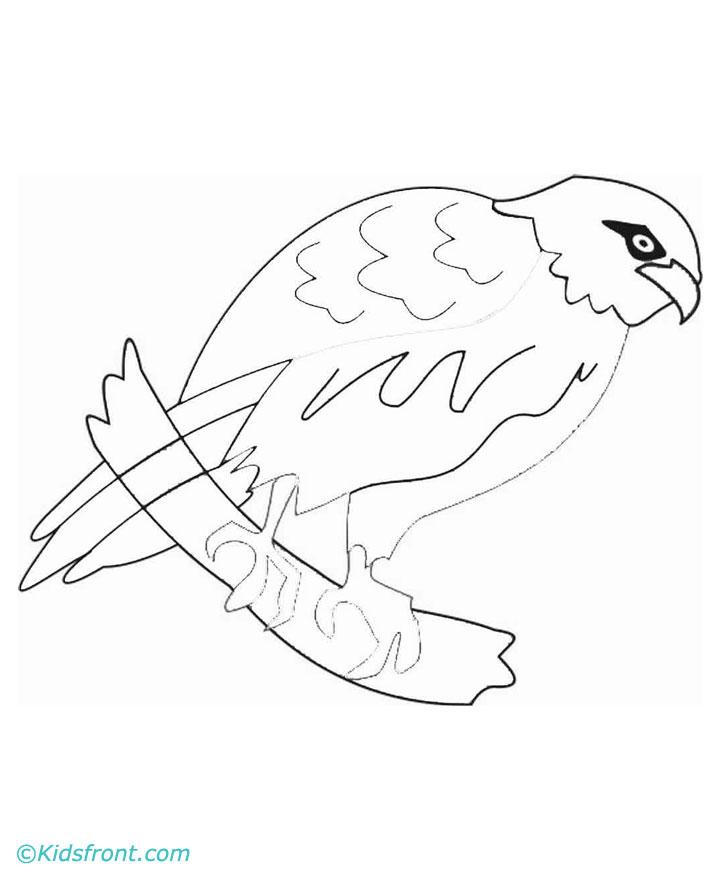 720x880 Hawk Head Drawing