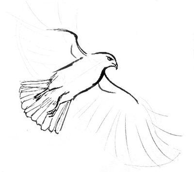 400x353 Hawk Drawing 050