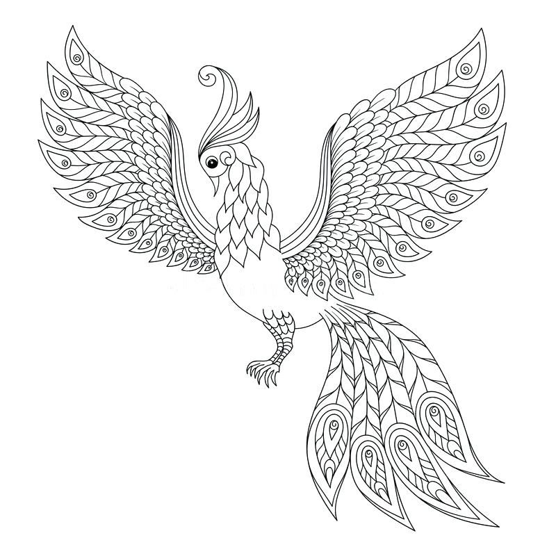 800x800 Peacock Feather Coloring Page Coloring Pages Peacock Adult