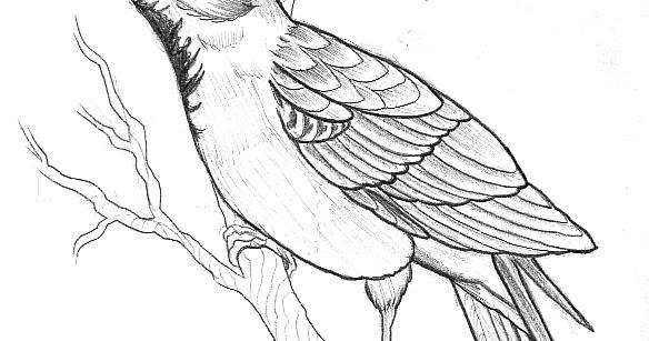 584x307 Tattoo Sketch A Day Birds April 15th
