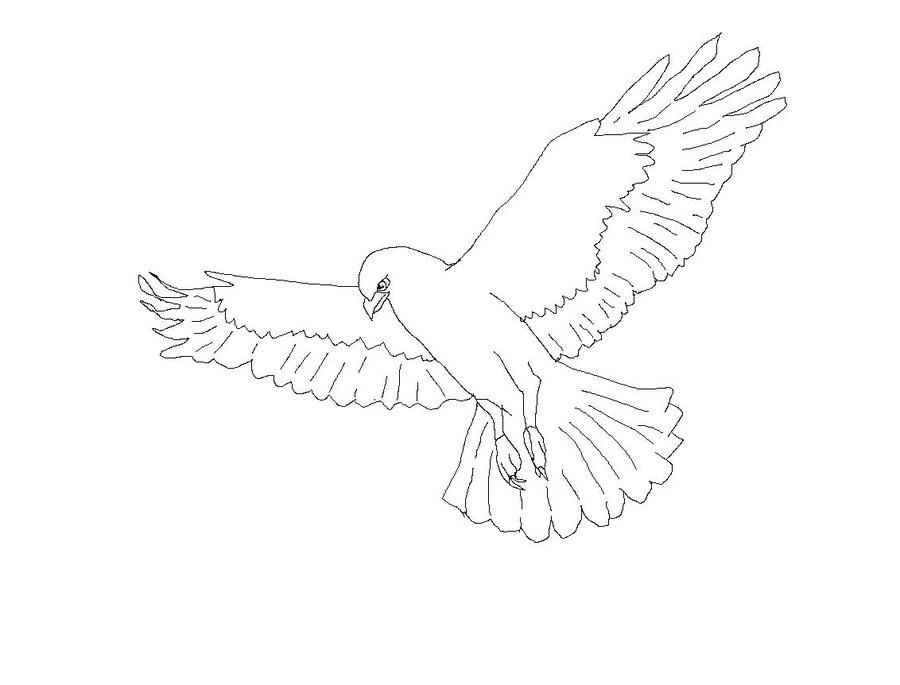 900x685 Hawk Line Art By Hunter Best Hunter
