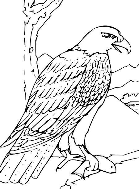 450x609 Eagle, Quill, Wing, Annex, Feather, Owl, Wildlife, Nature