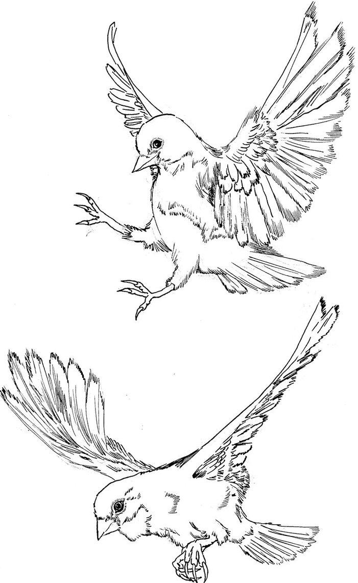 701x1140 Finches In Flight By Hidden By Art