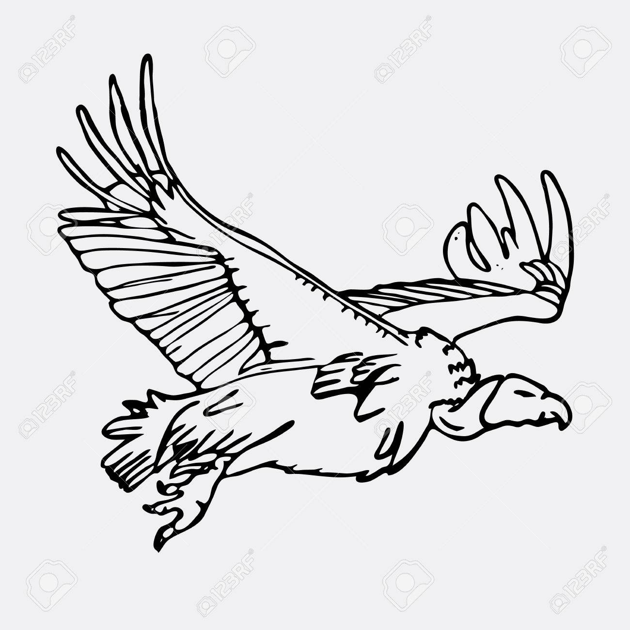 1300x1300 Hand Drawn Pencil Graphics, African Vulture, Hawk. Engraving