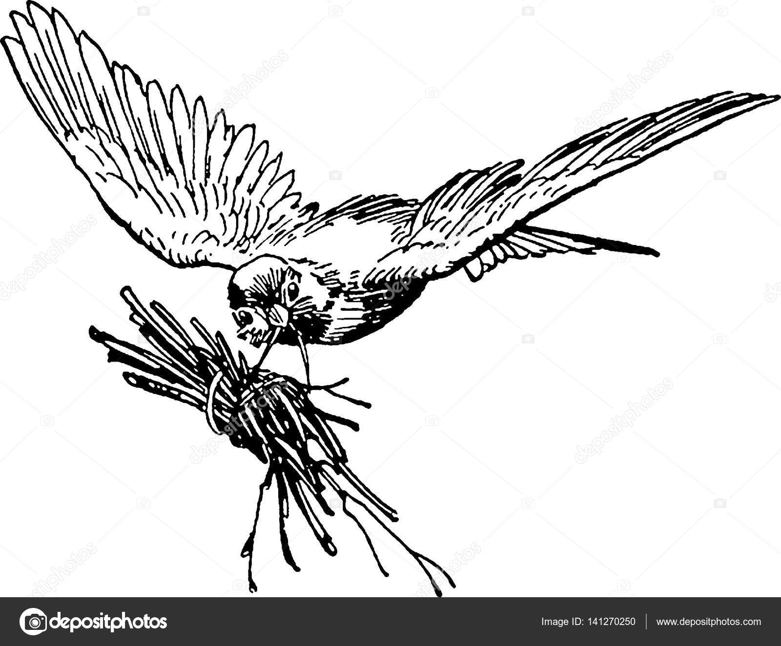 1600x1324 Vintage Image Flying Bird Stock Photo