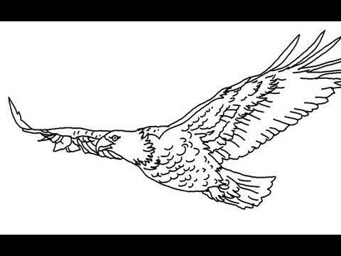 480x360 Best Eagle Drawing Easy Ideas