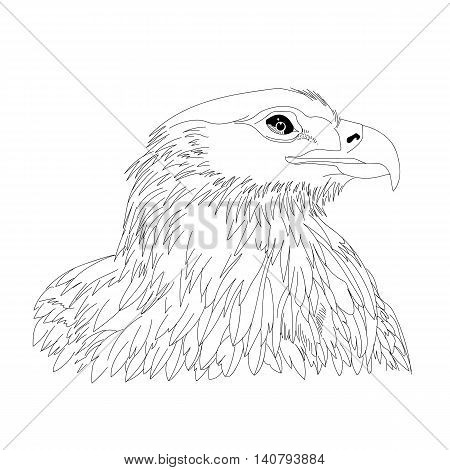 450x470 Graphical Hand Drawn Eagle, Hawk, Vector Amp Photo Bigstock
