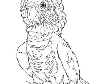 340x270 Hawk Headed Parrot Etsy