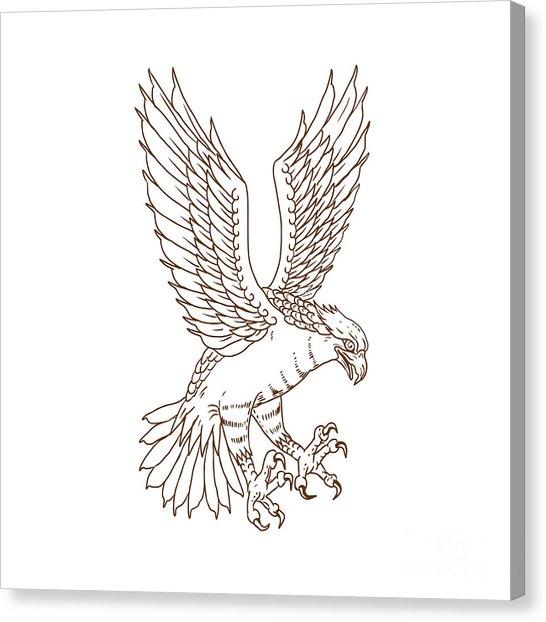 546x622 River Hawk Canvas Prints