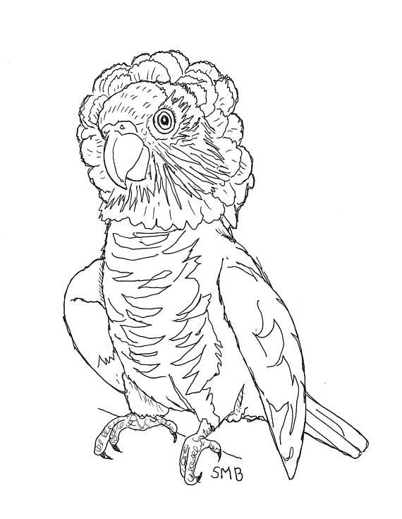 570x735 Sally Blanchard's Companion Parrot Parrot, Wild Bird Amp Animal