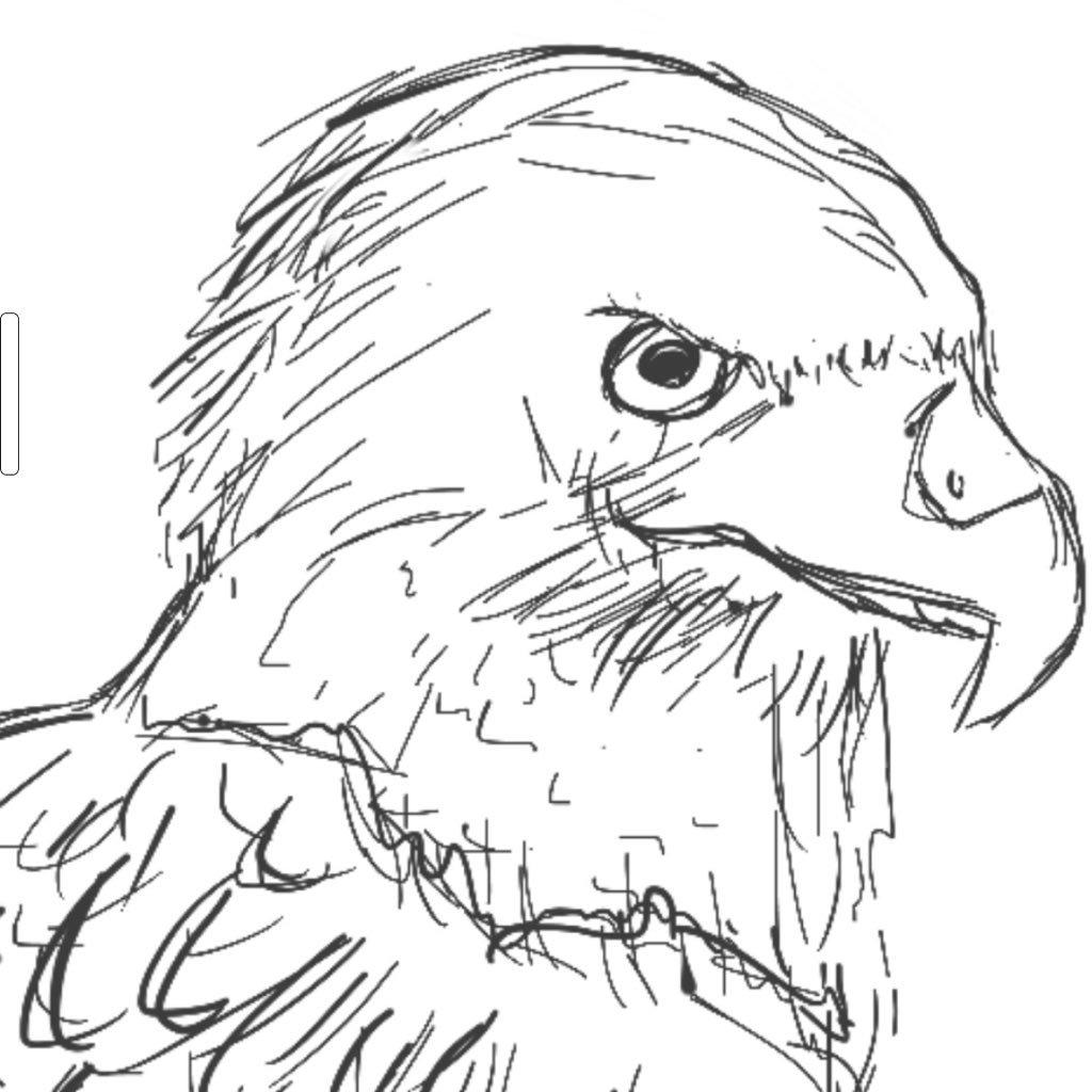 1024x1024 Shadow Hawk (@amysterioushawk) Twitter