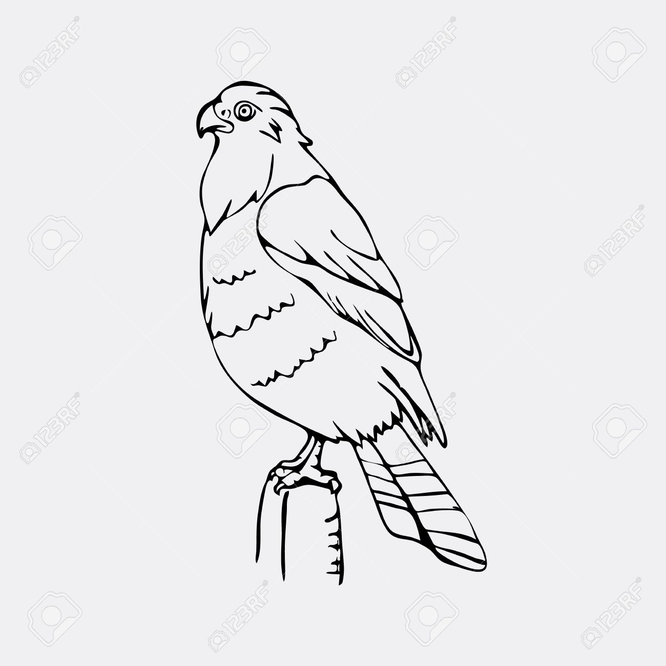 1300x1300 Hand Drawn Pencil Graphics, Vulture, Eagle, Osprey, Falcon, Hawk