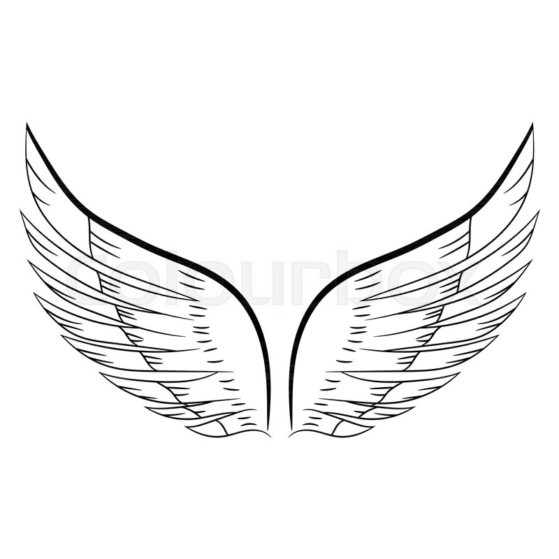 800x800 Sketch Of A Pair Of White Wings. Vector Illustration. Hand Drawing