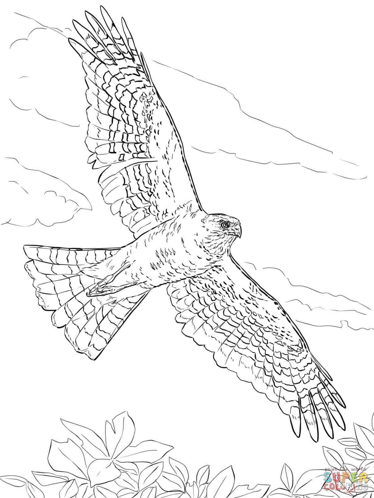 1213x1618 How To Draw A Cartoon Hawk. How To Draw Flying Birds. Pin Drawn