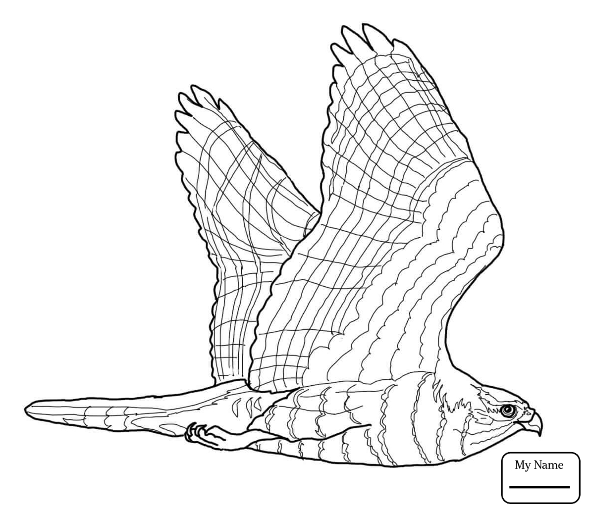 1191x1036 Hawk 19 Birds Coloring Pages For Kids