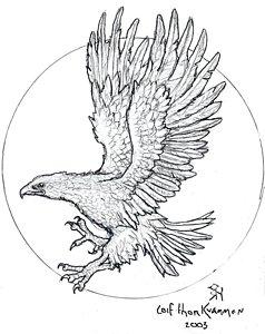 238x300 Hawks Drawings