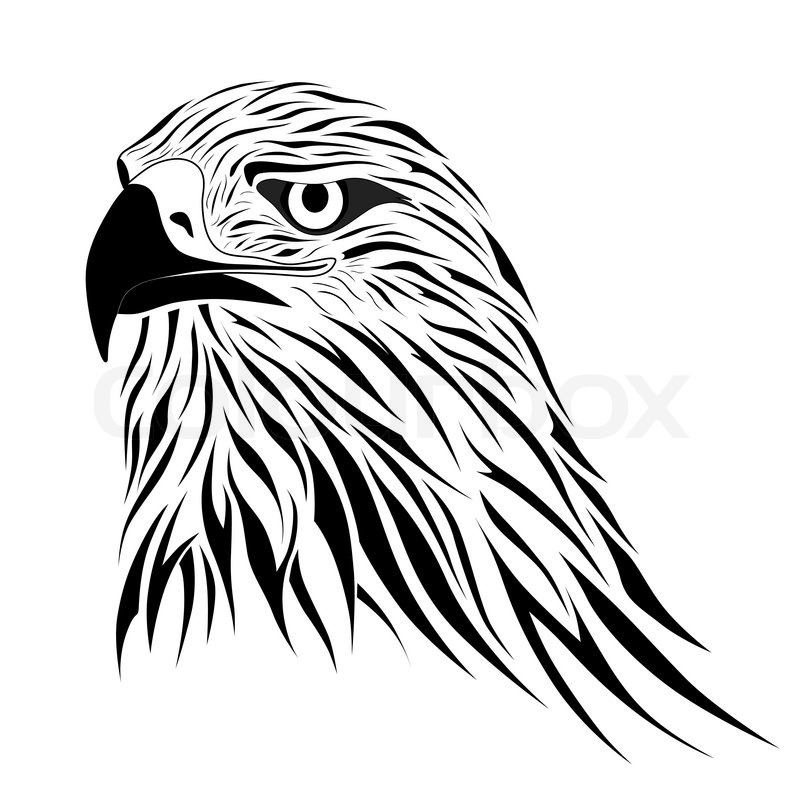 800x800 Abstract Hawk In The Form Of A Tattoo Stock Vector Colourbox