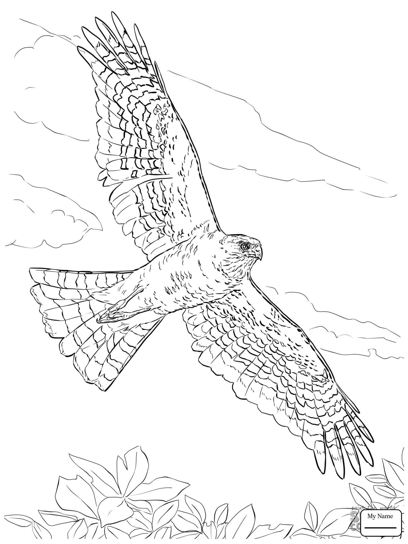 1567x2089 Coloring Pages For Kids Birds Hawk 3 Hawks Azcoloring.club