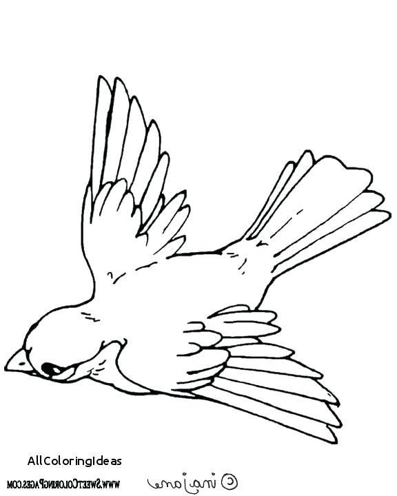 576x720 Birds Of Prey Coloring Pages