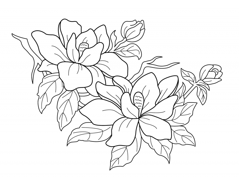792x612 Index Of Coloringpagesnatureflowers
