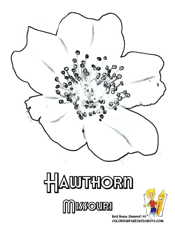 612x792 Maryland Flag Coloring Page State Flower Coloring Page Hawthorn