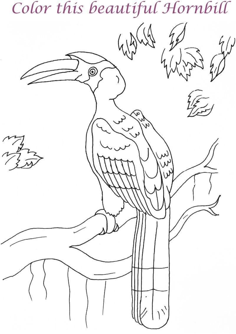 800x1133 Hornbill Printable Coloring Page For Kids