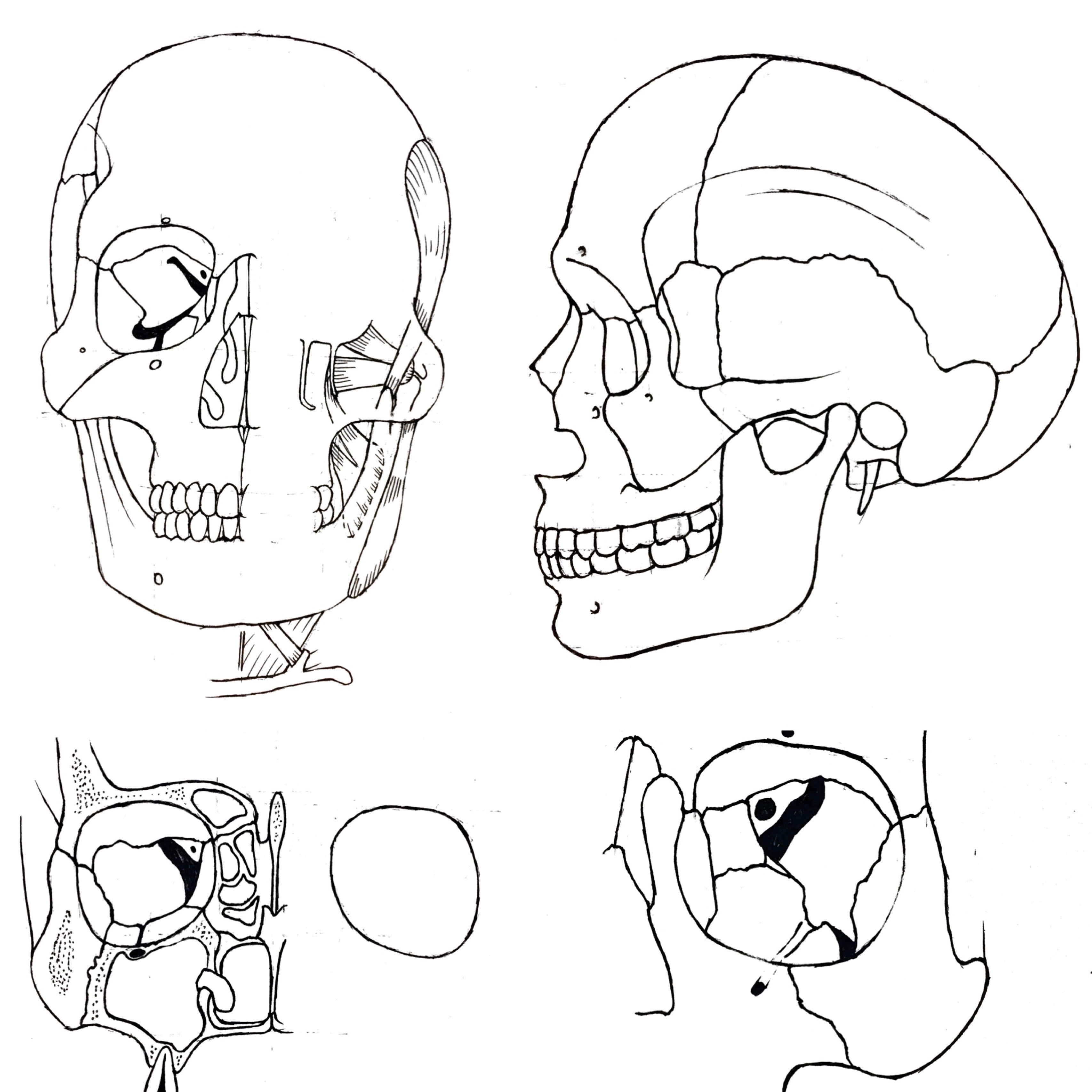 3413x3413 Teaching Students Head And Neck Anatomy Through The Art Of Drawing