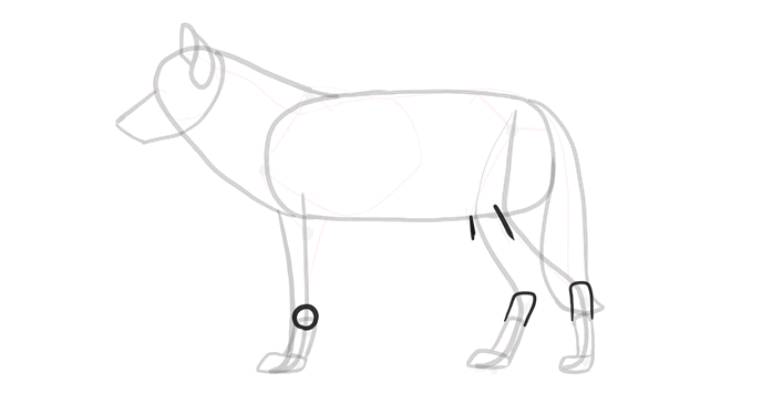688x365 How To Draw Wolves Head And Shoulders, Knees And Paws