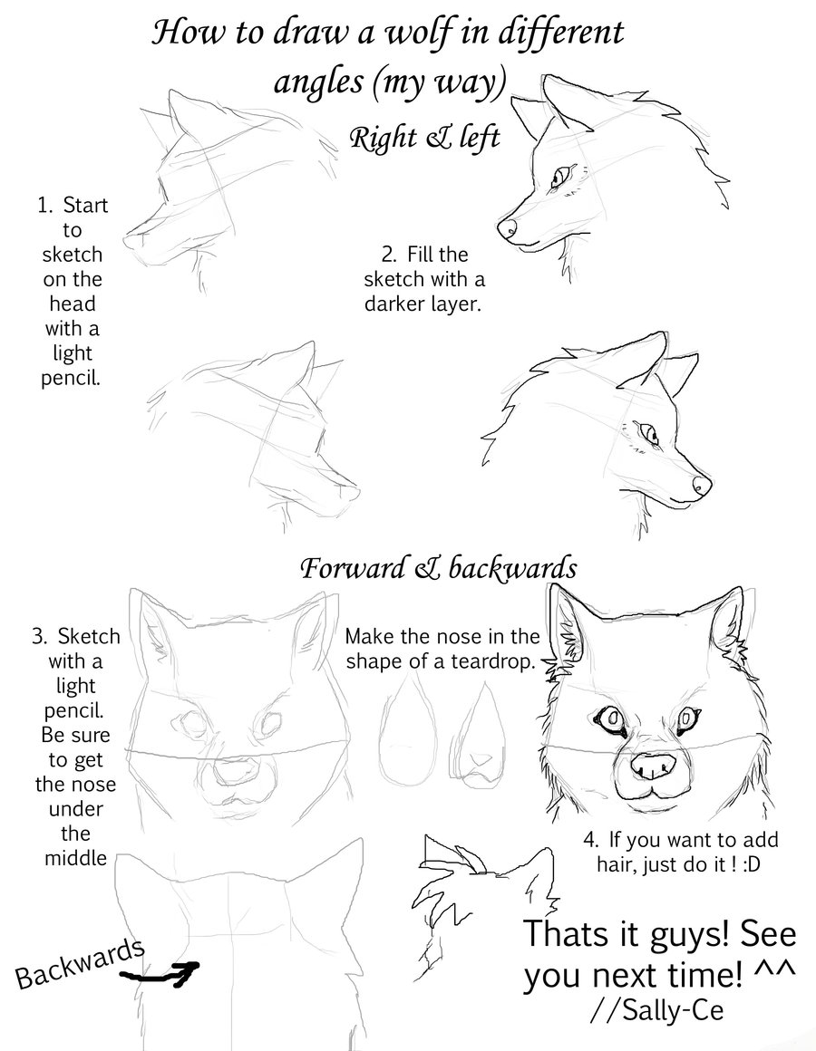 900x1160 How To Draw S Wolf In Different Angles By Sally Ce