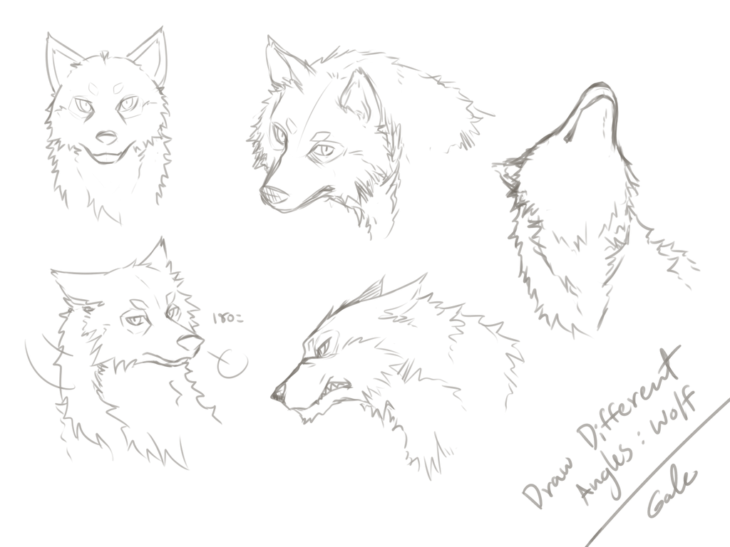 1024x768 Wolf's Face Angles Practicing By Galecoroco