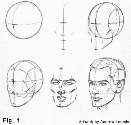 425x405 Free Download How To Draw A Head Step By Step Andrew Loomis