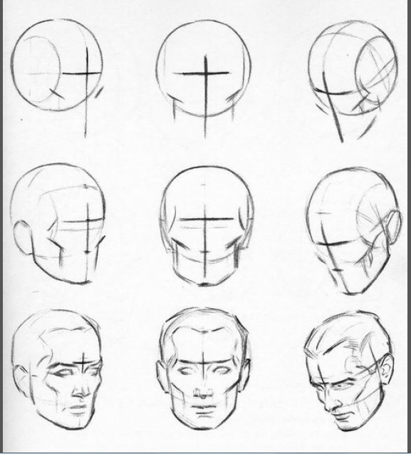 577x637 Head Construction And Shape Figureanatomy