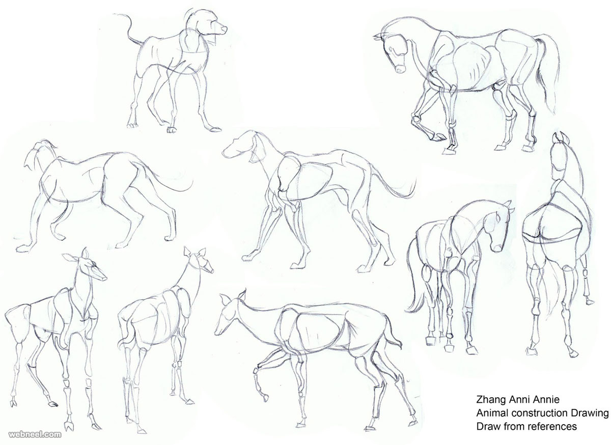1200x874 How To Draw Animals 10