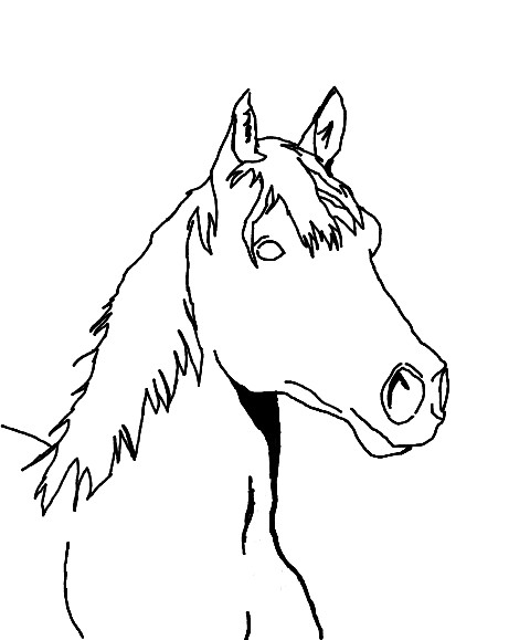 480x579 Horse Head Sketch By Lolaflyingpig