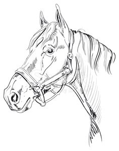 236x299 Horse Head Sketch Stock Vectors