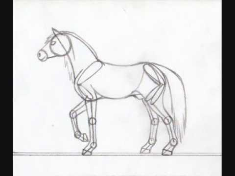 480x360 Horse Anatomy Drawing