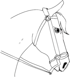 235x260 How To Draw A Horse