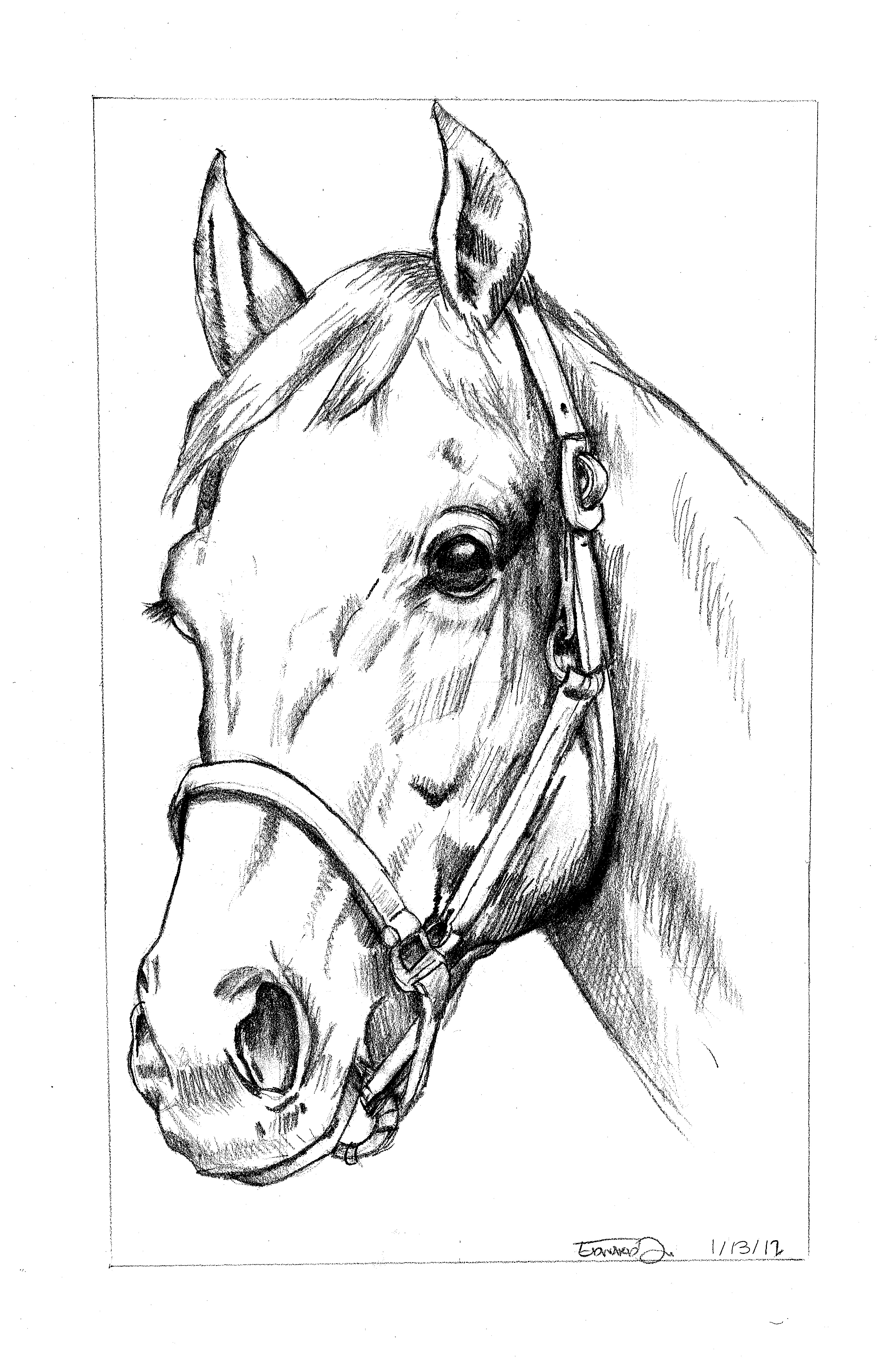 3300x5100 Untitled Horse Sketch Art Blog