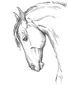 228x300 Horse Head Drawing Drawings
