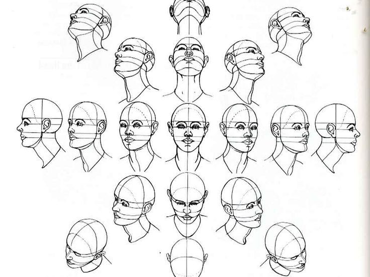 Head Shapes Drawing At Getdrawings Free For Personal Use Head