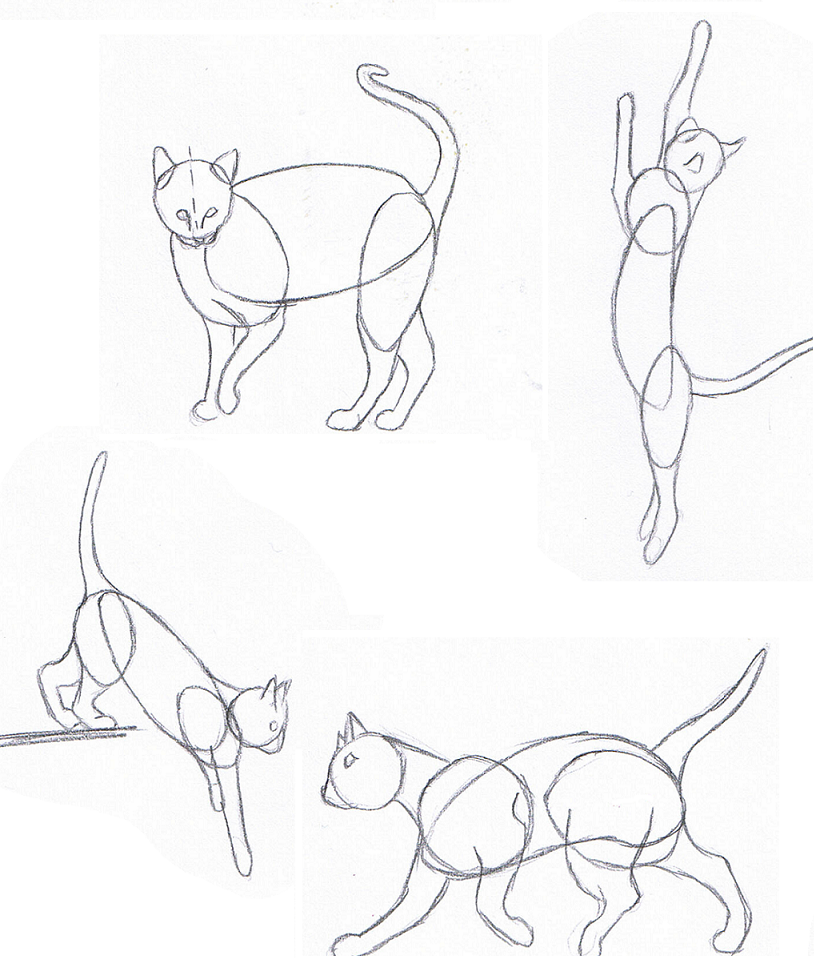 814x958 Cat How To Draw Pupil Shape Do It Yourself Paradise